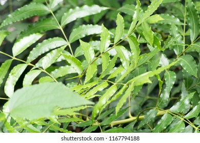 close up shot of tropical plant's leaves