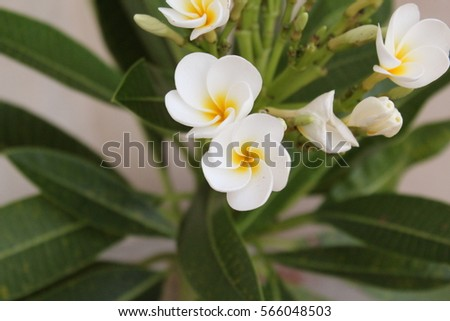 Close Shot White Flowers Yellow Center Stock Photo Edit Now