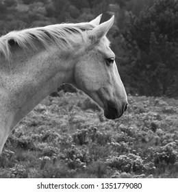 A close up shot of a white horse found near Wilderness, South Africa.