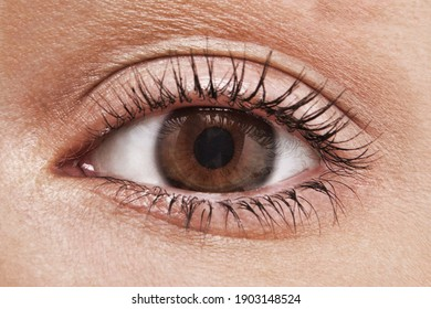Close up shot of woman eye with hazel brown eyes