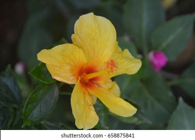 Close up shot of yellow flower