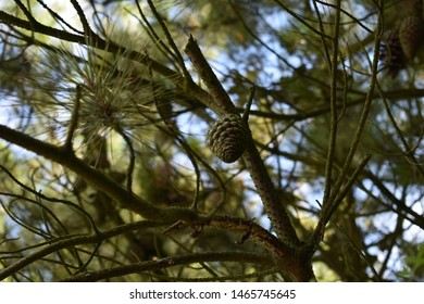 Close up shots of plants and tree bark
