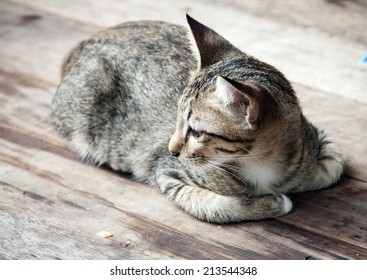 close up side face of stray cat on the wood floor