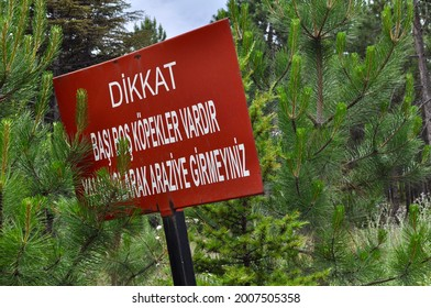 Close up of a sign in the forest in Metu, Ankara, Turkey. Warn for unleashed dogs in the Turkish language. Beware of Dingoes. Do Not Enter Alone. Be careful road signs.