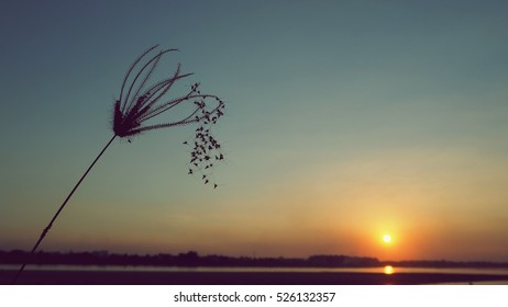 Close up silhouette bush of grass plants in Mekong river bank in evening sunset twilight, dark dramatic vintage landscape background