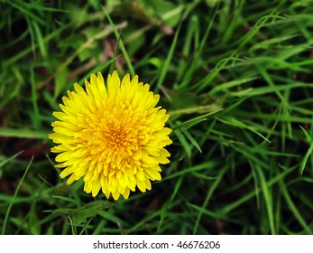 close up of single yellow dandelion on a dark green grass background