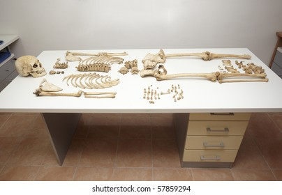 close up of a skeleton on white table in autopsy room