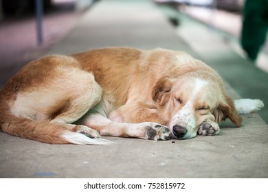 close up of sleeping dog