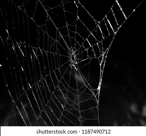 Close up of a sliver spiderweb over a spooky dark lake at night