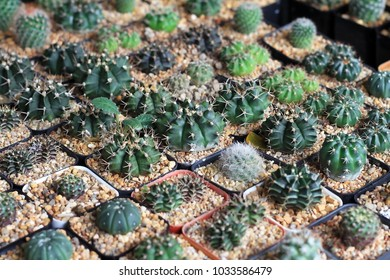 Close up of small cactus in pot