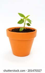 Close up of a small flower pot and green plant isolated on white background.