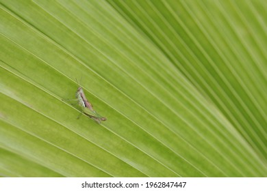 close up of small green grasshopper on green leaf in natural light