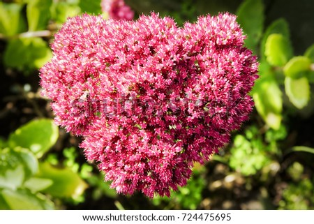 Close Small Pink White Flowers Heart Stock Photo Edit Now