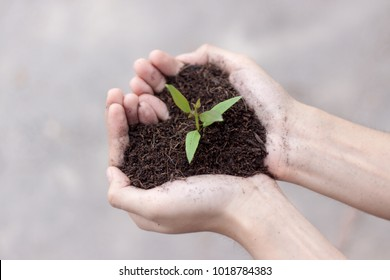 Close up small plants with black soil on two hand. Earth day and Ecology concept. - Shutterstock ID 1018784383
