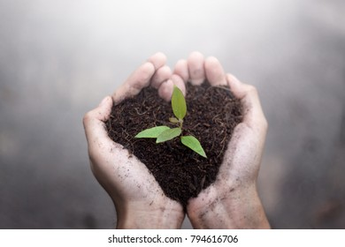 Close up small plants with black soil on two hand. Earth day and Ecology concept.