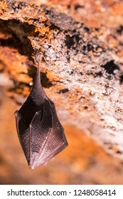 Close up small sleeping horseshoe bat covered by wings, hanging upside down on top of cold natural rock cave while hibernating. Creative wildlife photography. Creatively illuminated blurry background.
