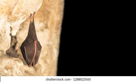 Imágenes, fotos de stock y vectores sobre Cave Cute   Shutterstock