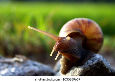 close up of small slimy snail sitting on the rock with selective focus and blurred background