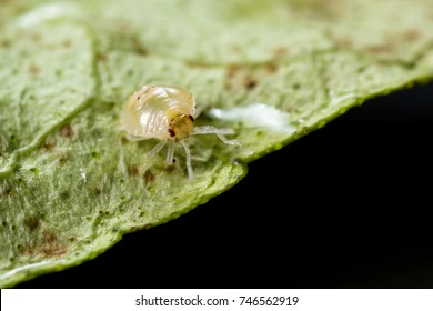 close up of a small spider mite on a dying leaf
