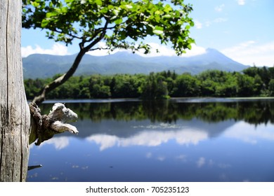Close up of small tree branch with goat shape sculpture look alike and second lake of Shiretoko Goko or Shiretoko Five Lake in background. The lake located in Shiretoko National Park, Hokkaido, Japan.