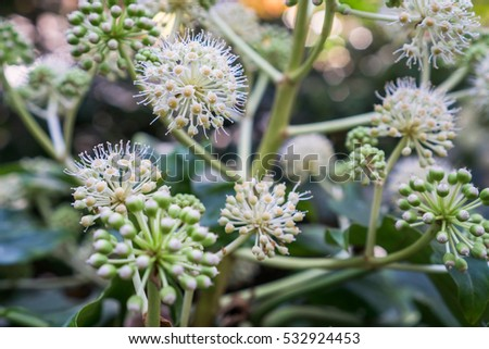 Close Small Umbel Cute White Flowers Stock Photo Edit Now