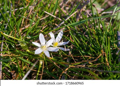 Close Up of small white and yellow flowers between long grass stems