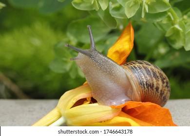 Eine Schnecke, die eine Blume isst
