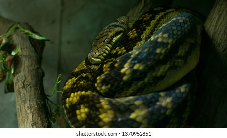 Snake In The Terrarium Snake Images Stock Photos Vectors
