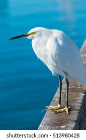 close up of a snowy egret on a wooden handrail