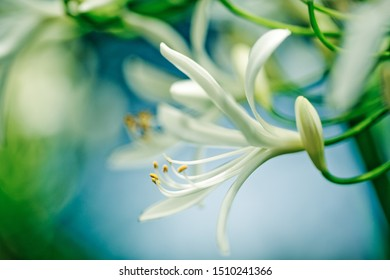 Close Up Soft White Flower Macro in the summer garden