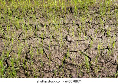 close up soil and green new rice on agriculture life