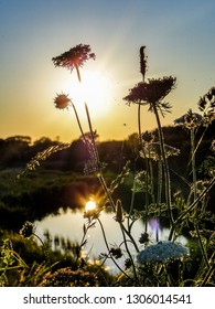 A close up of some wild grasses and plants. In the background the sun is setting, and is reflected in a pond
