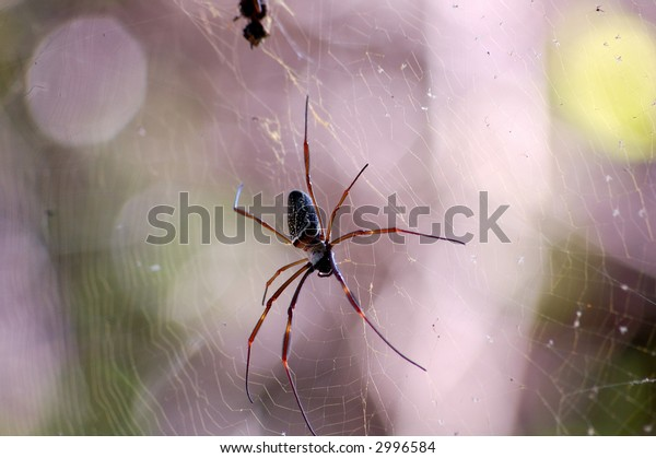 Close up of a spider hanging between the trees