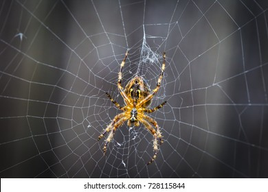 Close up of a spider in the middle of his web