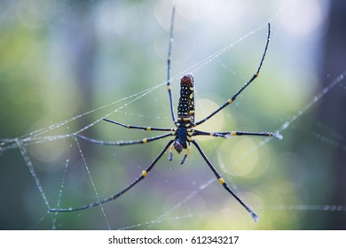Close up of spider on the web. - Shutterstock ID 612343217
