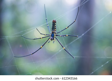 Close up Spider on a spider web with a green background - Shutterstock ID 612343166