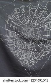 close up spider web