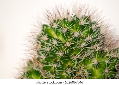 close up of a spikey cactus plant