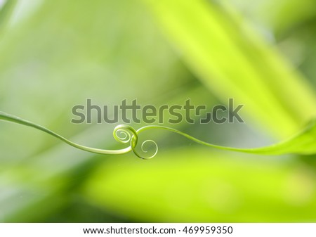 Close up of  spiral green leaf
