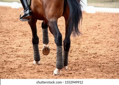 Close up of sport dressage horse legs running