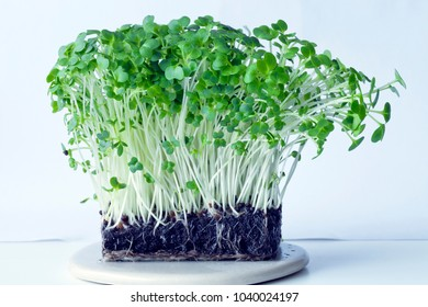 A close up of sprouted bunch of organic watercress plants.