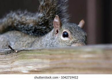 Close up of a squirrel