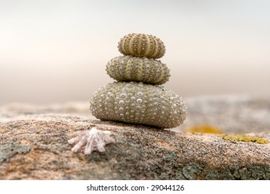 Close up of a stack of sea urchins on a coastal rock
