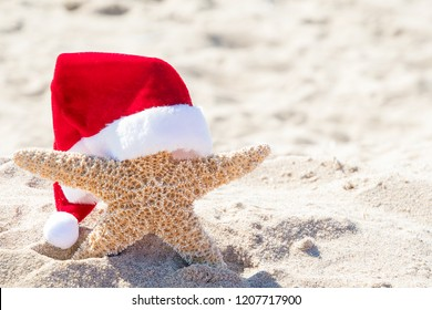 close up of starfish in beach sand wearing red and white furry Christmas Santa hat