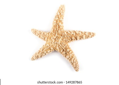 Close up of starfish isolated on white.