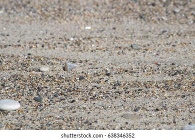 close up stony beach