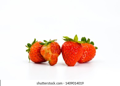 Close up of strawberries side by side. One is a malformed fruit compared with the expected shapes of the others. All are isolated against a plain white background. Space for copy above.