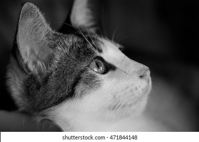Close up stray cat black and white version