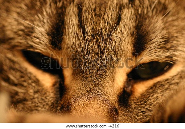 close up of striped cat