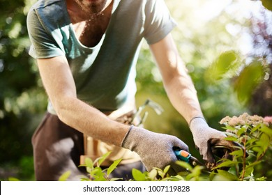 Close up of strong man in gloves cutting leaves in his garden. Farmer spending summer morning working in garden near countryside house.